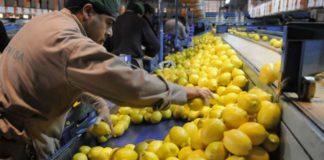 Limones tucumanos