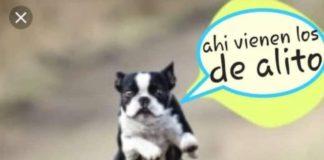 Memes-Alito-Assan-y-el-perro-verde